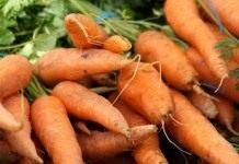 Любовь – Морковь