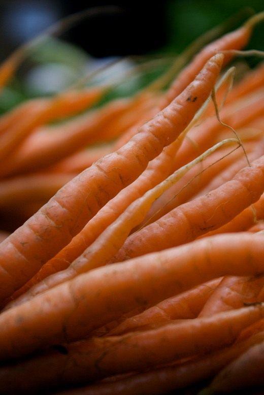 Морковь (Daucus)