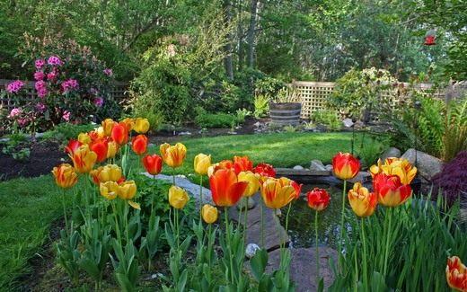 Весенний двор с прудом
