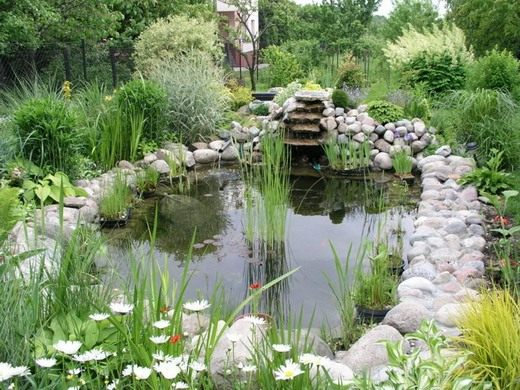 Берега декоративного пруда можно украсить водными и околоводными растениями