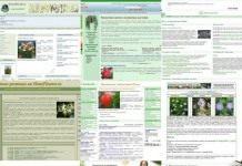 10 лучших сайтов о комнатных растениях