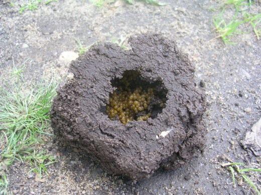 Гнездо медведки