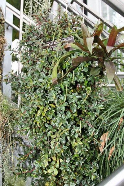 лекарство от вредителей для комнатных растений