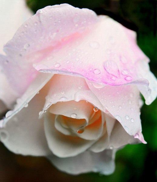 цветы из флиса васильки лори.