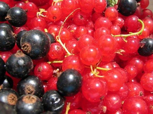 Ягоды чёрной и красной смородины