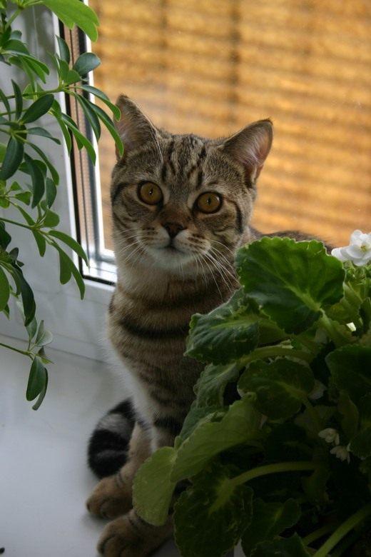 Ядовитые цветы для кошек фото