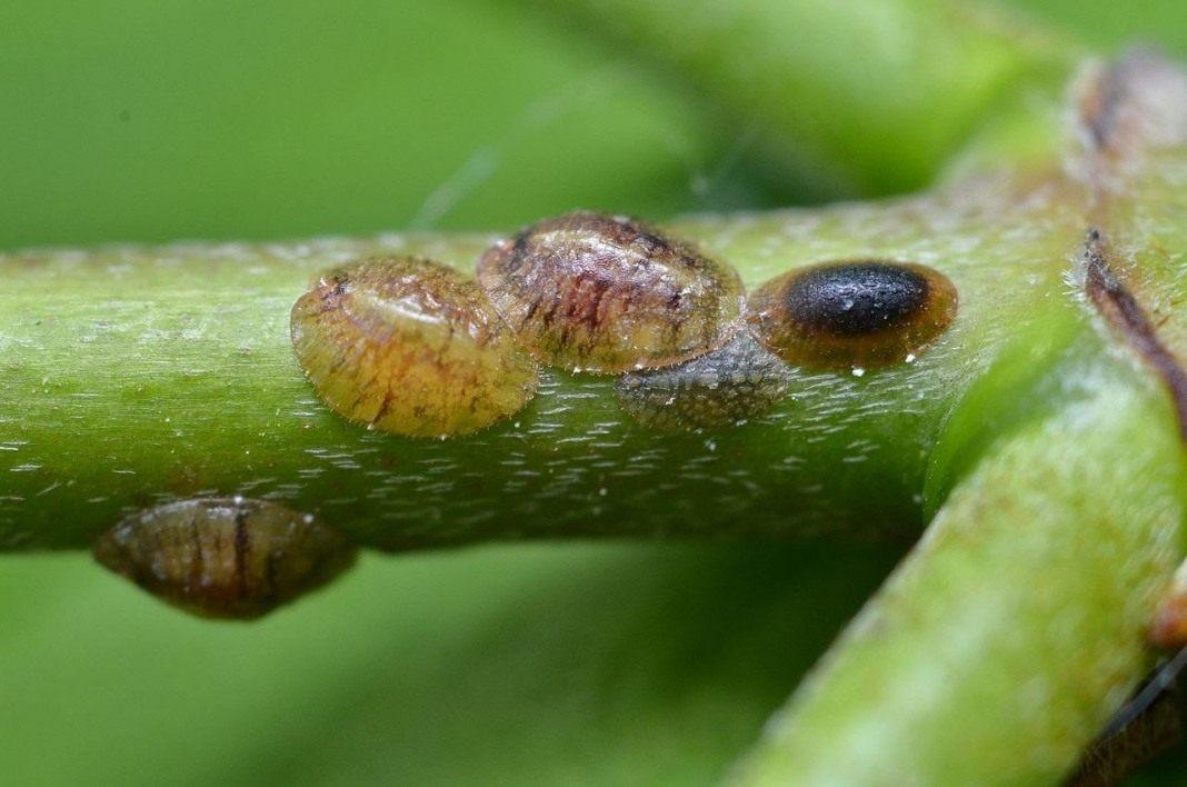 луковый настой от паразитов отзывы