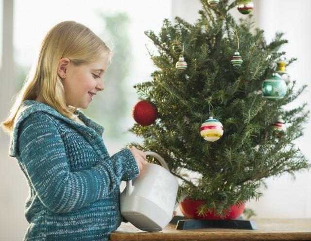 Увлажнение новогодней ёлки для сохранения иголок