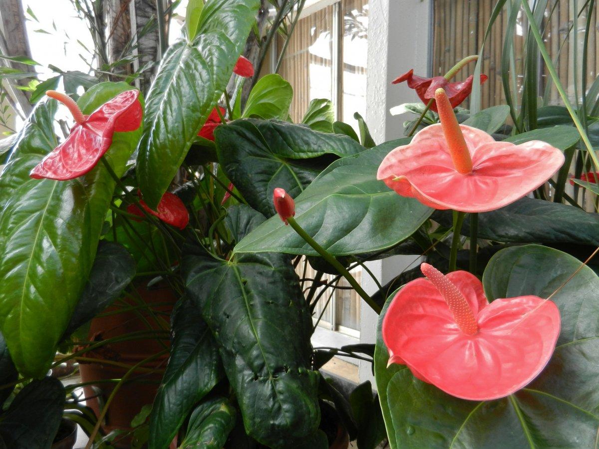 Цветок один стебель и на нем листья название