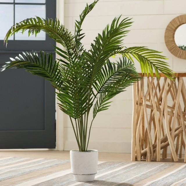 Пальма может украсить любой интерьер