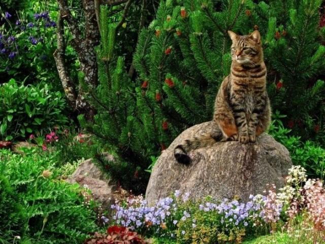 Поедая растения кошки восполняют недостаток витаминов