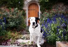 Многие растения опасны для домашних животных