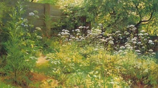 Уголок заросшего сада. Сныть-трава. Этюд. Шишкин И.И.