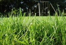 Как мы сажали газон