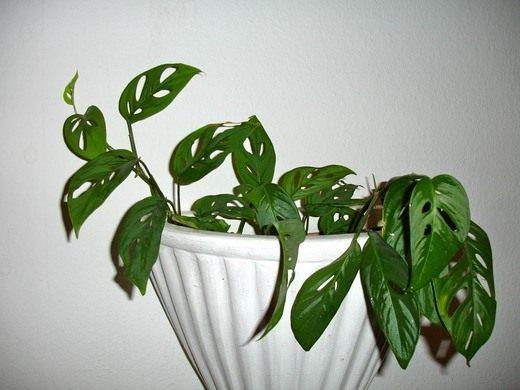 как уничтожить вредителей на комнатных растениях