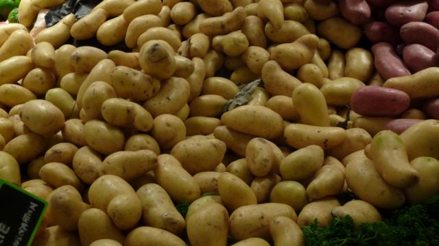 Картофель сорт 'Amandine'