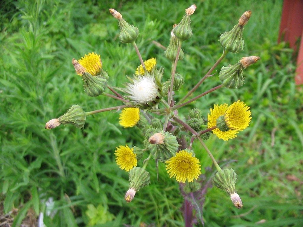 красивый цветок сорняк 5 букв - Софт: http://you-ladie.ru/krasiviy-cvetok-sornyak-5-bukv.html
