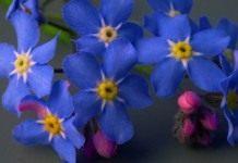 Цветы и декоративные кустарники. Часть 3.