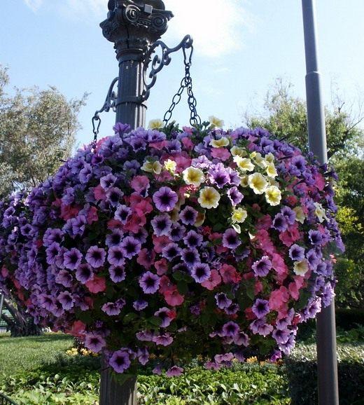 Цветы и декоративные кустарники