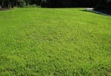 Волшебный газон