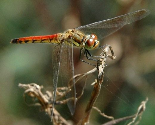 Как привлечь насекомых в сад