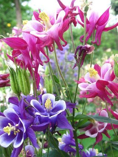 В природе семена многолетних растений