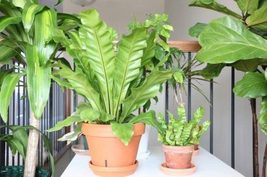 Растения растущие в тени  Womans Day