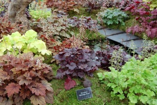 Разнообразие сортов Гейхеры представленное в международном саде BBC