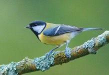 Как привлечь птиц в сад