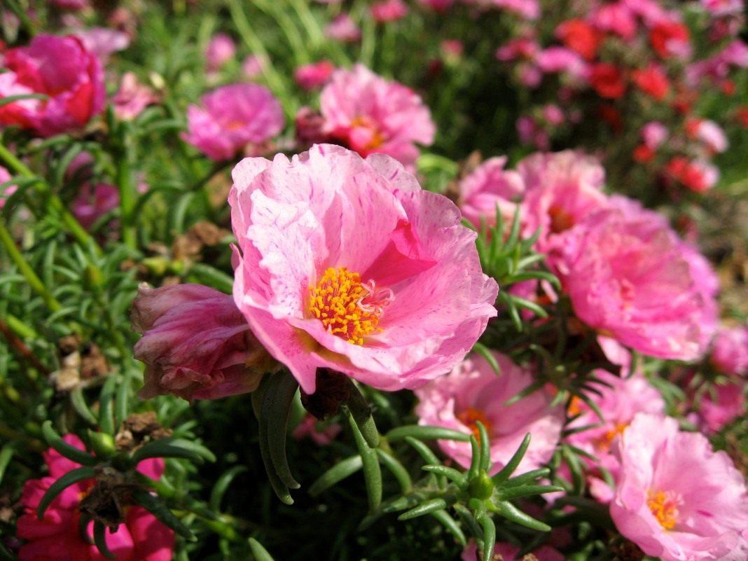 - Immagini di fiori tedeschi ...