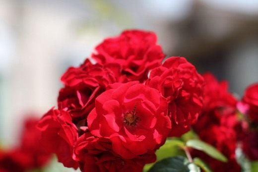 Цветы и декоративные кустарники. Часть 5.