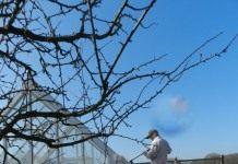 Какие работы необходимо сделать в саду весной?