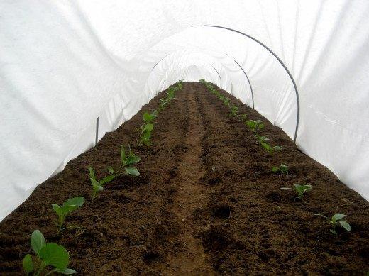 Весной при должном укрытии можно приступать к высадке ранних овощных культур