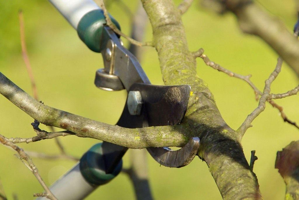 Как сделать из дерево обрезка 452