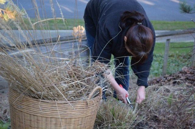 После схода снега, приступаем к уборке сада от садового мусора и сухих растений