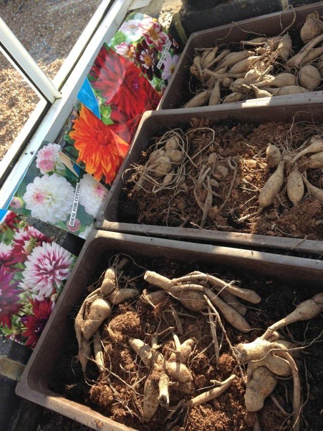 Подготовьтесь к высадке луковиц и корневищ многолетних и летних культур
