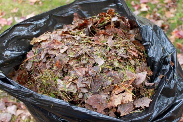 Для компостирования используется листва любых листопадных деревьев и кустарников