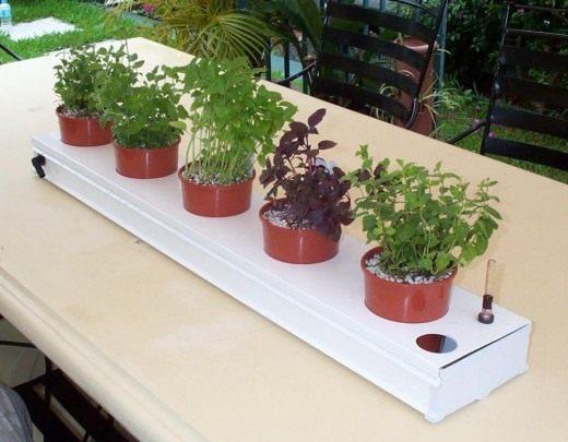 Выращивание трав в гидропонной системе