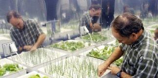 Салат, лук, и редис выращиваемые в гидропонной системе