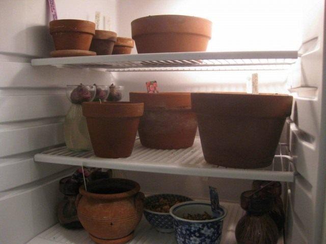 Ёмкости с луковицами для выгонки в холодильнике