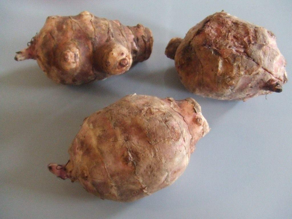Земляная груша или топинамбур