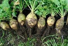 Подкормка овощей органическими удобрениями