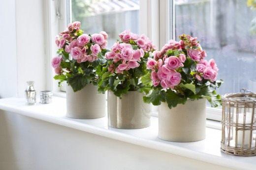 Цветы для спальни благоприятные с фото