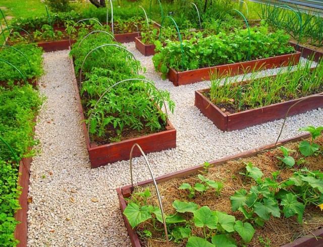 Планируем огород правильно