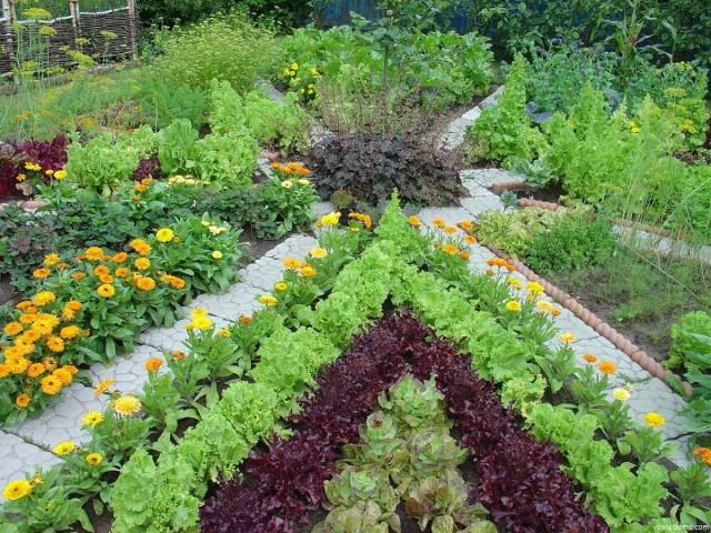 Наилучшими для огорода являются участки, освещаемые солнцем весь день