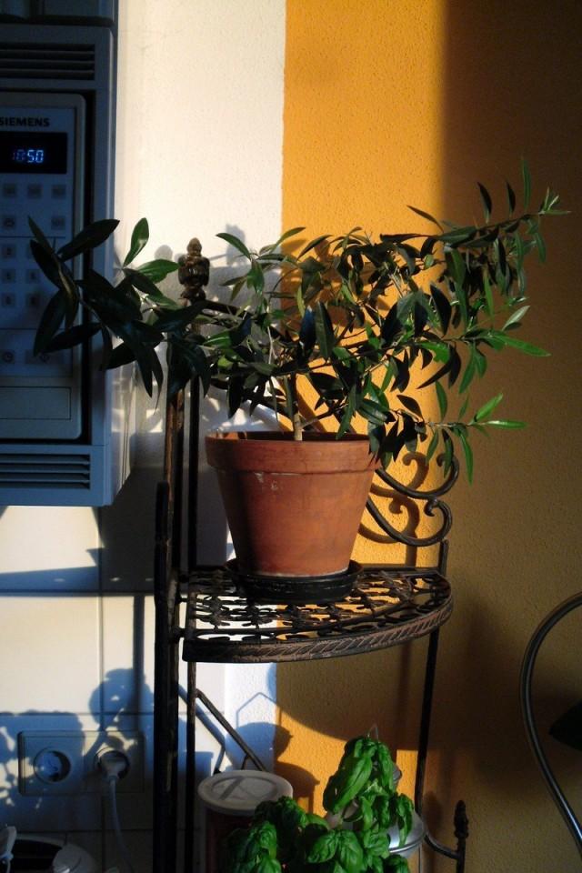Растение в дизайне интерьера