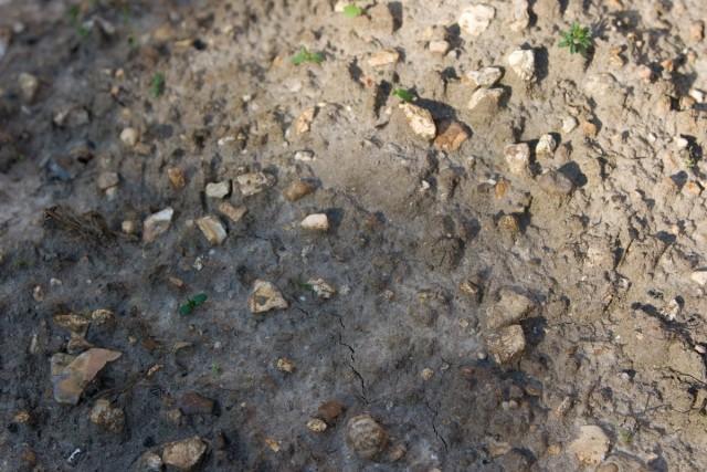Почва (Soil)
