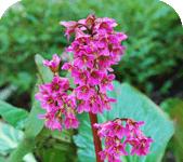 Формирование цветника полезных трав