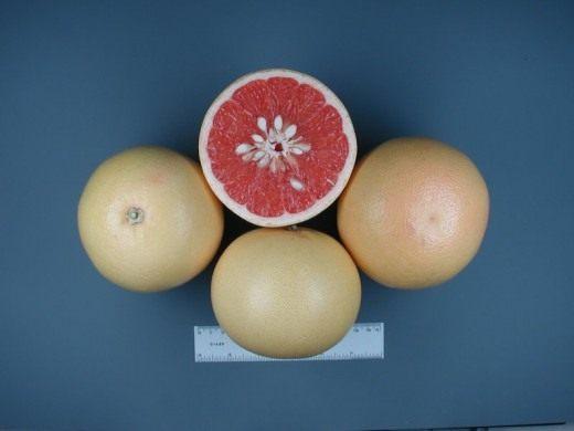 Грейпфрут Hudson (Hudson Grapefruit)