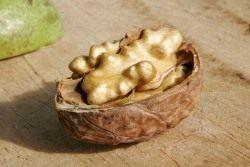 Ядро грецкого ореха в скорлупе